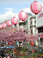桜まつり(提灯)